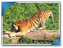 National Park, Bandhavgarh Travel Packages