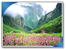 Valley of Flowers Vacation Packages